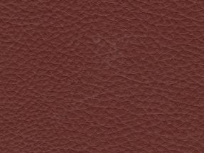 Mustang Brown 054